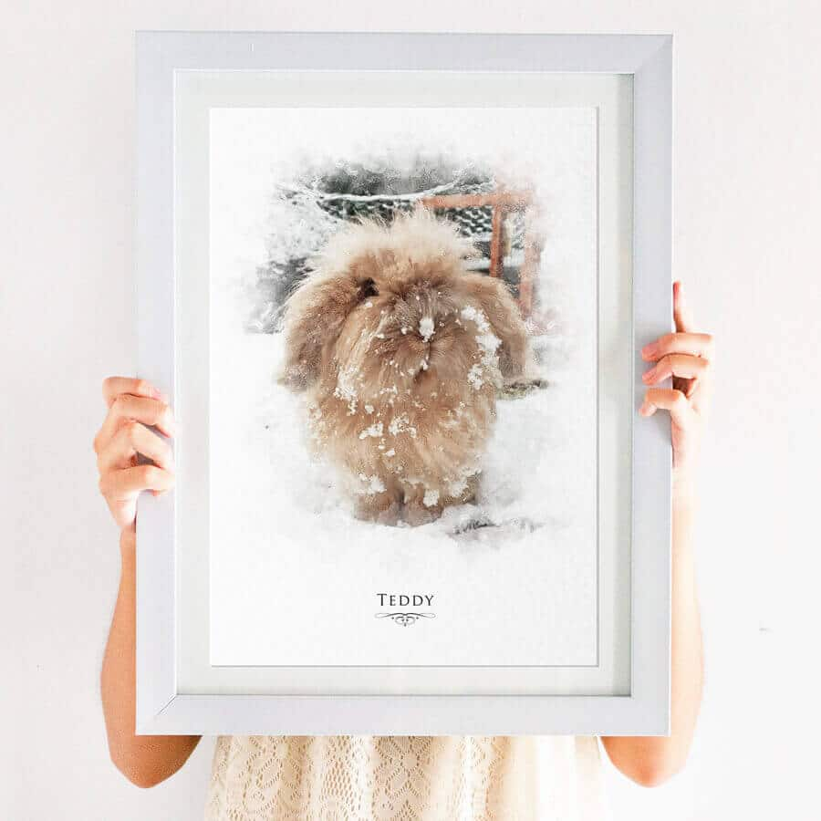 rabbit pet portrait