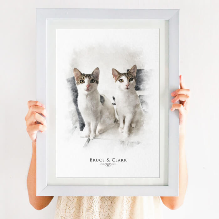 pet portrait of cats