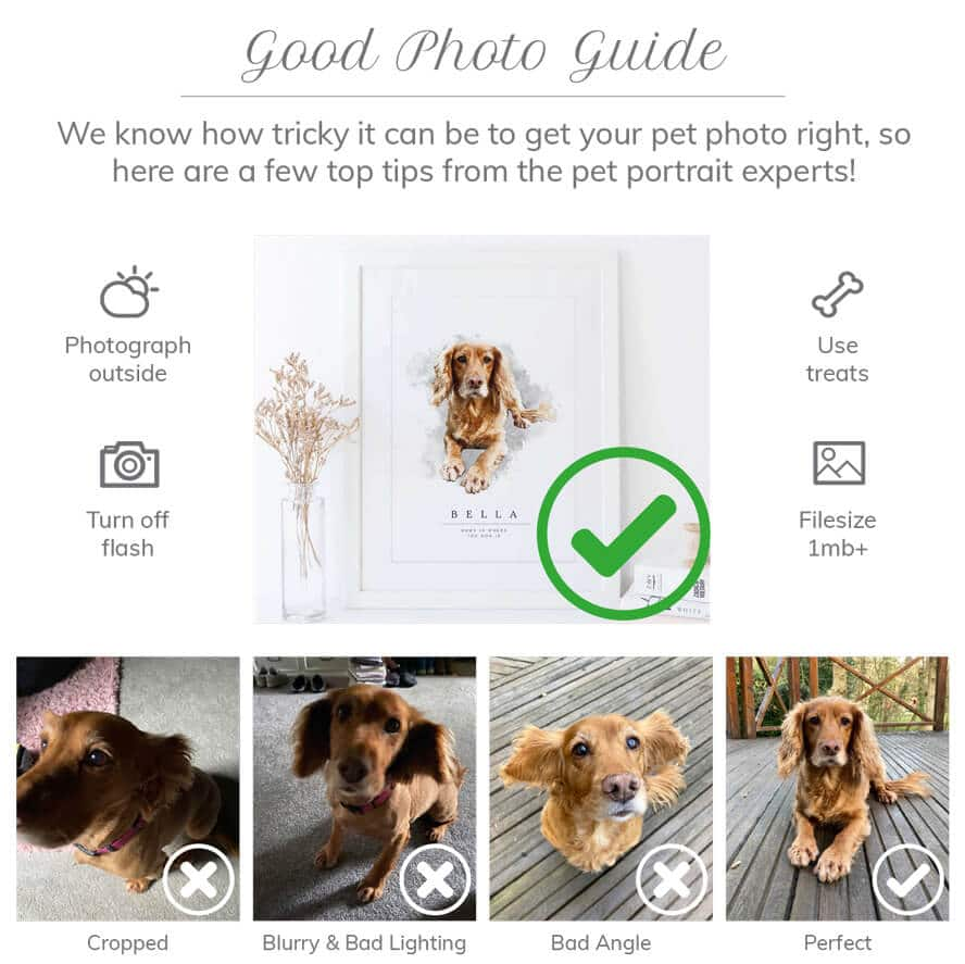 Top Tips to Photograph Your Pet for a Portrait
